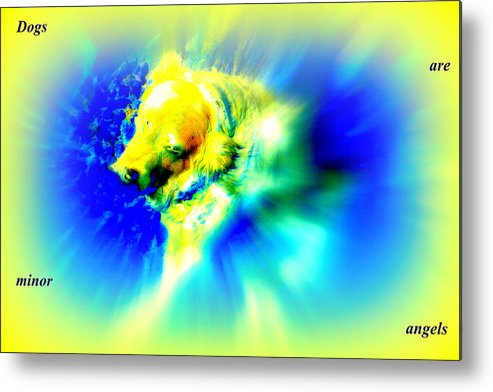 Dog Metal Print featuring the photograph You Dogs Truly Are Minor Angels As They Say But Whats In It For You  by Hilde Widerberg