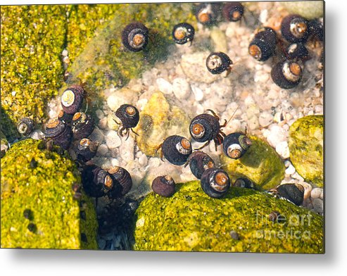 Monetery Bay Metal Print featuring the photograph Monterey Bay Tide Pools by Artist and Photographer Laura Wrede