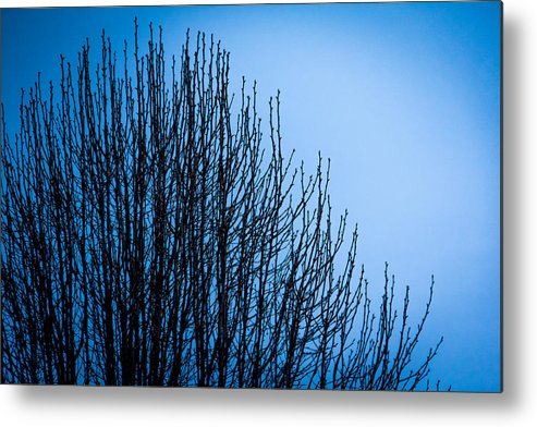 Morning Metal Print featuring the photograph Morning Silhouette by Debbie Orlando