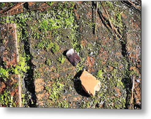 Moss Metal Print featuring the photograph Moss by Judy Thorne