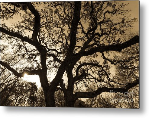 Austin Metal Print featuring the photograph Mother Nature's Design by John Wadleigh