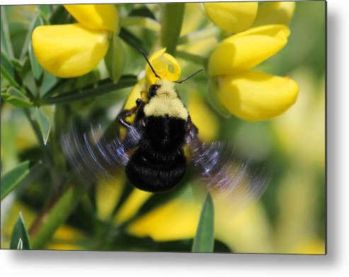 Spider Metal Print featuring the photograph Motion by Ru Tover