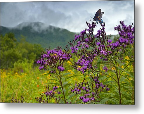 Butterfly Metal Print featuring the photograph Mountain Butterfly by Eric Albright