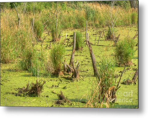 Illinois Metal Print featuring the photograph Mucky Swamp by Deborah Smolinske