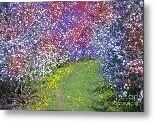 Color Metal Print featuring the photograph My Coat Of Many Colors by The Stone Age