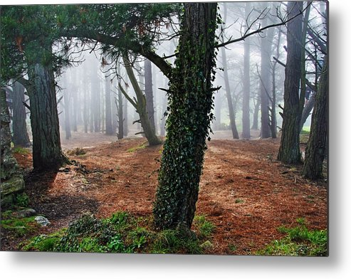 Ireland Metal Print featuring the photograph Mysterious Forest by Aidan Moran