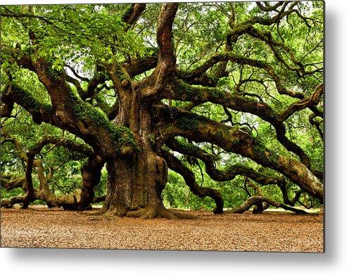 Charleston Metal Print featuring the photograph Mystical Angel Oak Tree by Louis Dallara