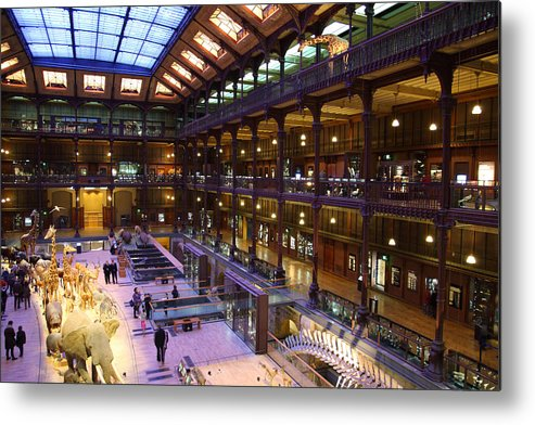 Paris Metal Print featuring the photograph National Museum Of Natural History - Paris France - 011370 by DC Photographer