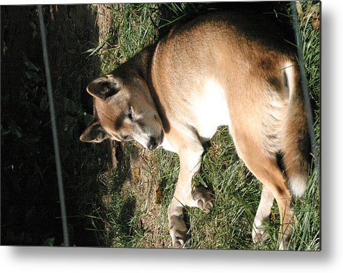 National Metal Print featuring the photograph National Zoo - Mammal - 12124 by DC Photographer