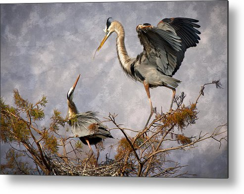 Bird Metal Print featuring the photograph Nesting Time by Debra and Dave Vanderlaan