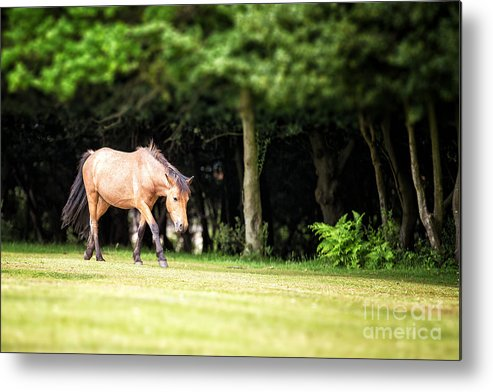 Forest Metal Print featuring the photograph New Forest Pony by Jane Rix