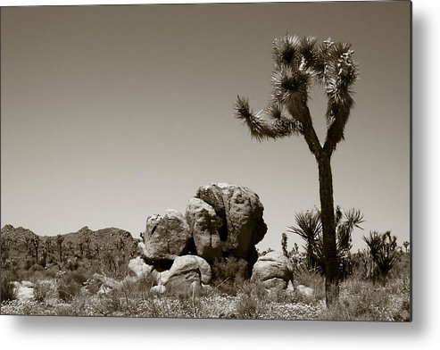 Joshua Tree Metal Print featuring the photograph Joshua Tree National Park Landscape No 4 In Sepia by Ben and Raisa Gertsberg