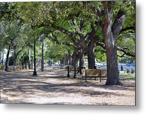 Fauna Metal Print featuring the photograph No This Is Not Paris by Judith Russell-Tooth