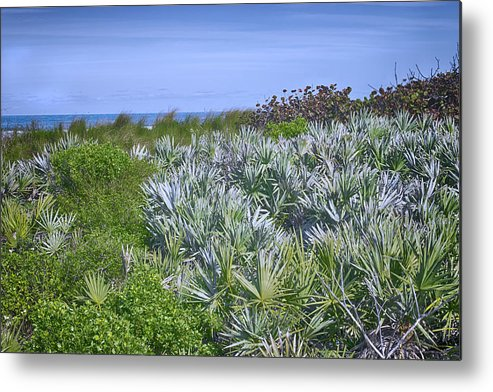 Ocean Metal Print featuring the photograph Ocean Vegetation by Louise Hill