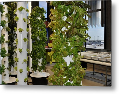 Garden Metal Print featuring the photograph O'hare Airport Hydroponic Garden by Diane Lent