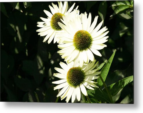 Olbrich Garden Metal Print featuring the photograph Olbrich Garden View 3 by Natural Focal Point Photography