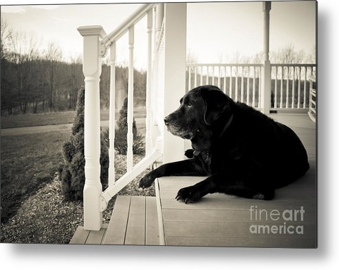 Dog Metal Print featuring the photograph Old Dog On A Front Porch by Diane Diederich
