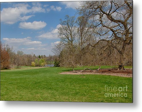 Elm Metal Print featuring the photograph Old Elm Haverford College by Kay Pickens