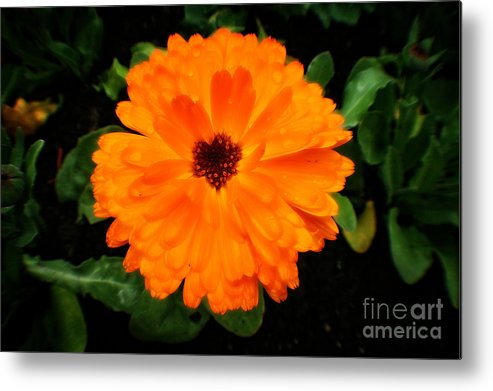 Fleur Metal Print featuring the photograph Orange Flowers by Doc Braham