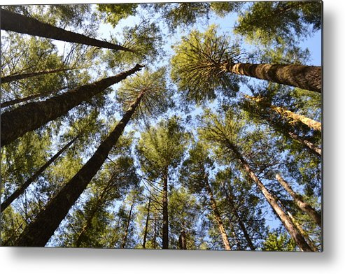 Coastal Forest Metal Print featuring the photograph Oregon Forest by Evan Silver