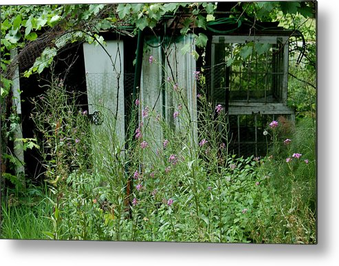 Rural Metal Print featuring the photograph Overgrown by Suzanne Gaff