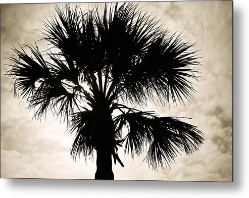 Palm Metal Print featuring the photograph Palm Sihlouette by Marilyn Hunt