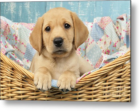 Horizontal Metal Print featuring the digital art Patchwork Puppy Dp793 by Greg Cuddiford