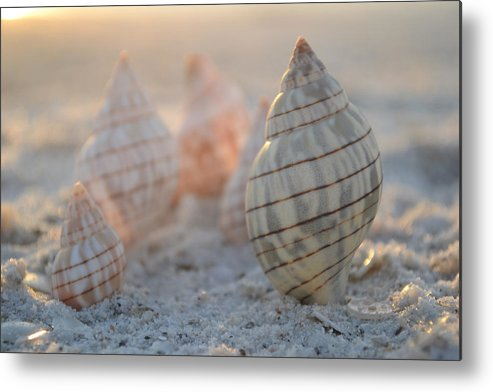 Seashell Metal Print featuring the photograph Patience And Faith by Melanie Moraga