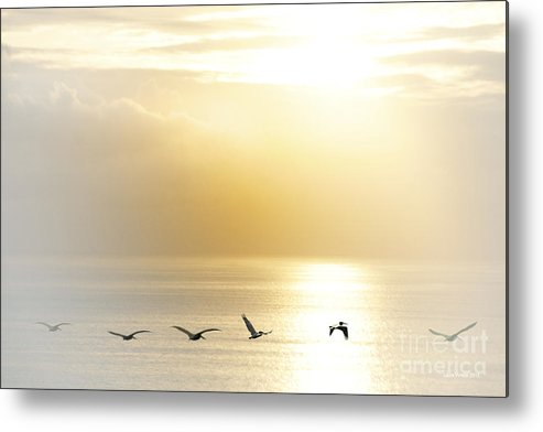 Pelican Art Metal Print featuring the photograph Pelicans Over Malibu Beach California by Artist and Photographer Laura Wrede