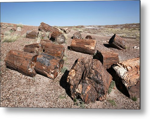 Plant Metal Print featuring the photograph Petrified Forest by Adam Hart-davis