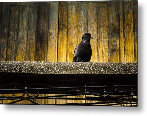 Aged Metal Print featuring the photograph Pigeon On The Balcony by Weerapat Wattanapichayakul