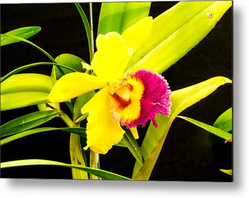 Background Bloom Blooming Blur Buds Color Colored Colorful Exotic Flower Flowers Natural Nature Orchid Pink Plant Small Tropical Metal Print featuring the photograph Pink And Yellow Orchid Flower by Tibor Co