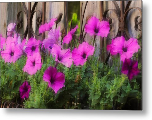 Pink Metal Print featuring the photograph Pink Beauties by Jim Vance