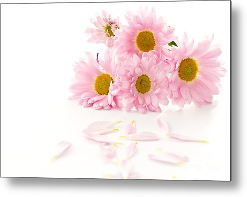 Pink Chrysanthemums Metal Print featuring the photograph Pink Chrysanthemums Beautiful by Boon Mee