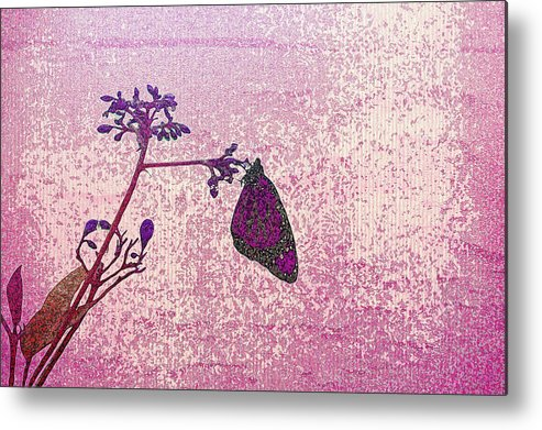 Butterfly Metal Print featuring the photograph Pink Monarch by Laurie Perry