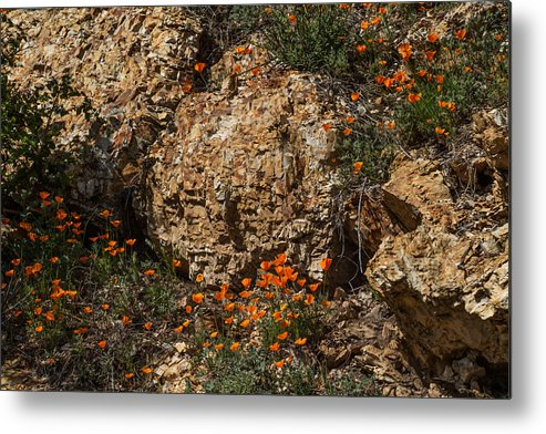 California Poppies Metal Print featuring the photograph Poppies And Rocks by Roger Mullenhour