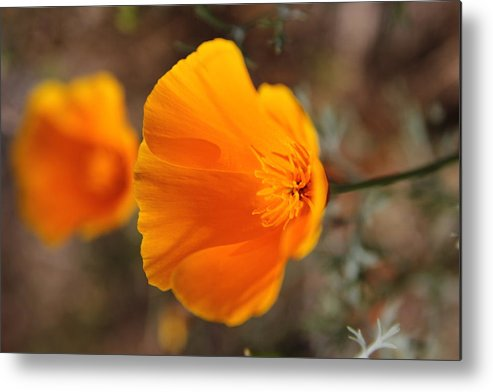 Poppy Metal Print featuring the photograph Poppy by Holly Ha Nguyen