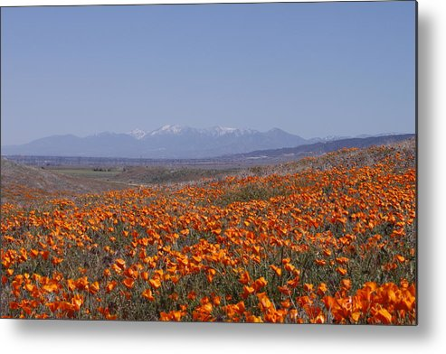 Poppy Land Metal Print featuring the photograph Poppy Land by Ivete Basso Photography