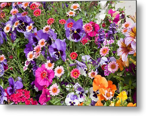 Flowers Metal Print featuring the photograph Posey Plot 2 by Carol Barrington