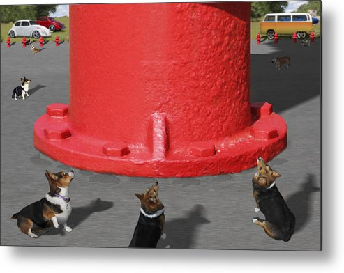 Corgis Metal Print featuring the photograph Postcards From Otis - The Hydrant by Mike McGlothlen