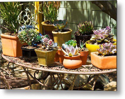 Potted Metal Print featuring the photograph Potted Succulents by Bernard Barcos