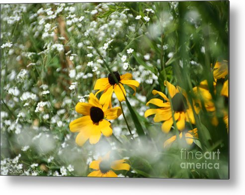Flower Metal Print featuring the photograph Prairie Colors by Susan Herber