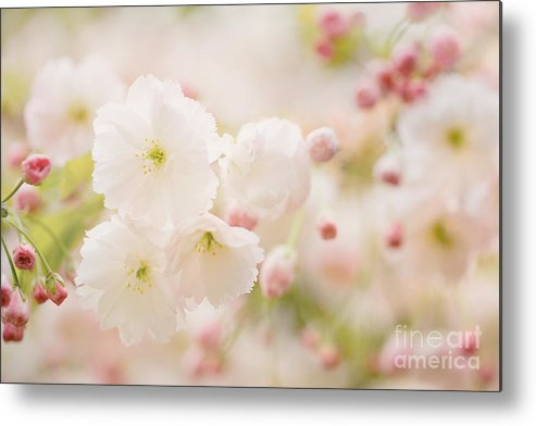 Blossom Metal Print featuring the photograph Pretty Blossom by Natalie Kinnear