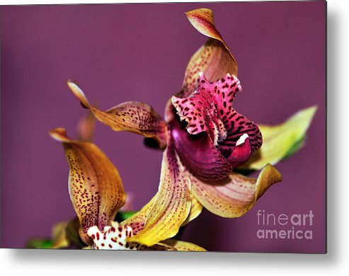 Photography Metal Print featuring the photograph Pretty Orchid On Pink by Kaye Menner