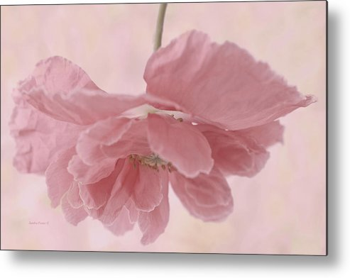 Poppy Metal Print featuring the photograph Pretty Pink Poppy Macro by Sandra Foster