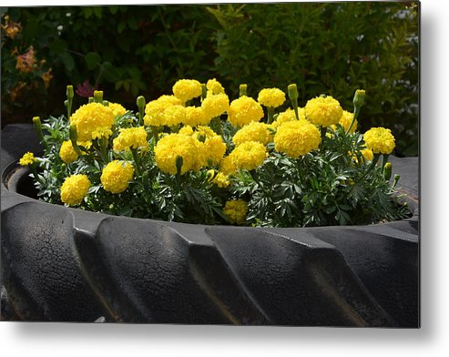 Flowers Metal Print featuring the photograph Pretty Tire by William Hallett