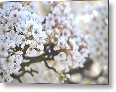 Spring Metal Print featuring the photograph Pretty White Flowering Tree In Spring by P S