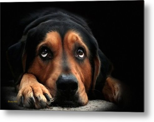 Puppy Dog Metal Print featuring the mixed media Puppy Dog Eyes by Christina Rollo