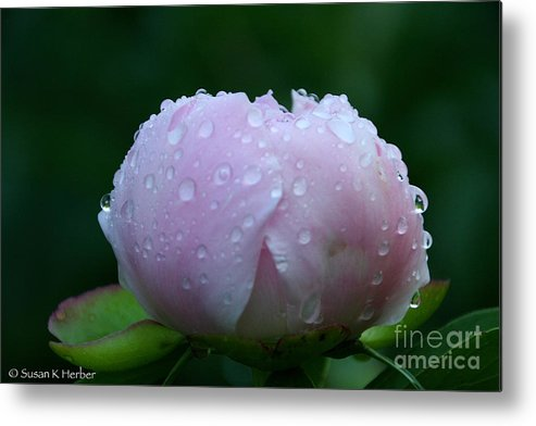 Flower Metal Print featuring the photograph Rain Comes Softly by Susan Herber