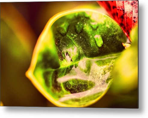 Drops Metal Print featuring the photograph Rain Drops On Leaf by J Riley Johnson
